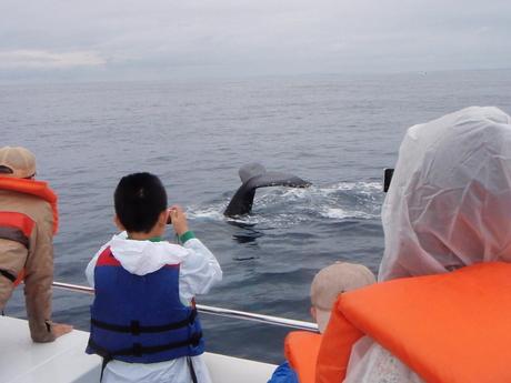 ホエールウォッチングツアー!クジラに会えなければ全額返金保証付き!